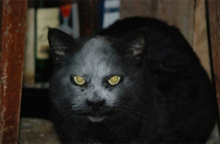 demon-cat 1