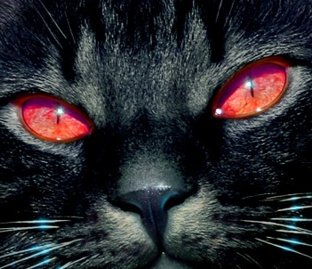 demon-cat 2